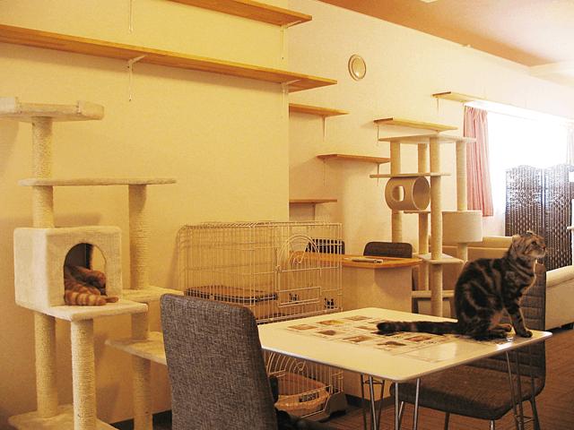 アミパ新潟店