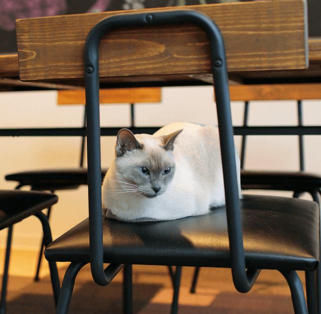 ねこカフェ&猫酒場 らて