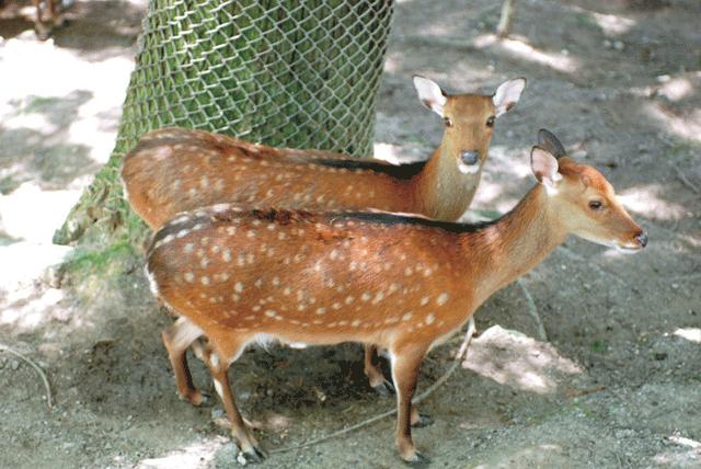 秋葉公園-動物広場(鹿)ヨコ